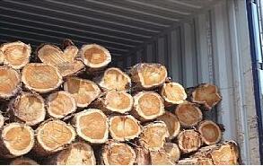 木材進口清關裝櫃現場