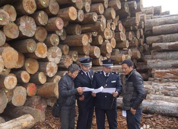 进口木材海关查验审核单证