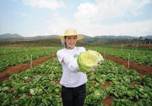 規範進口蔬菜清關保障身體健康