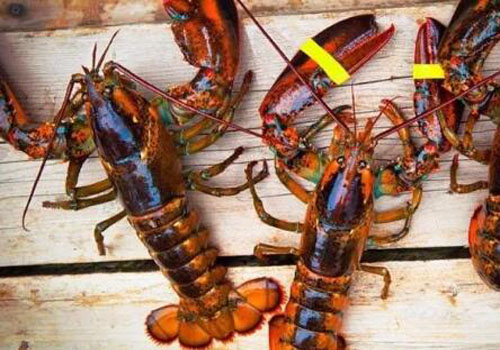 進口歐洲海鮮增添中國年味
