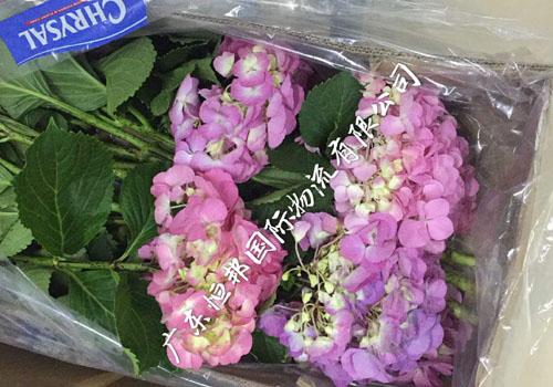 進口花卉送達機場規範申報