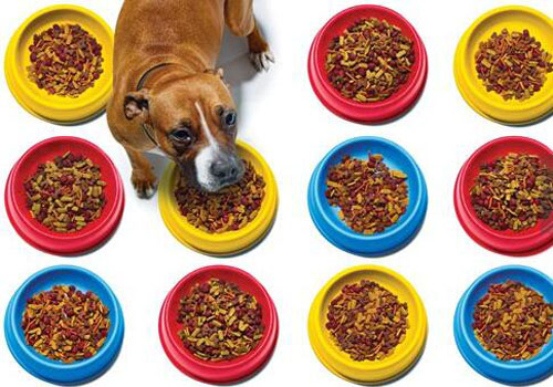 進口寵物糧國內熱銷