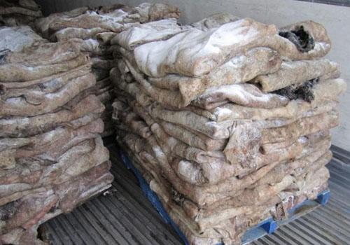 動物皮張是我國進出口貿易的重要組成部分